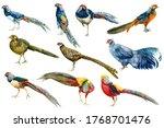 Pheasants  Watercolor Drawings...