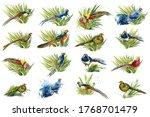 Set Of Birds  Pheasants...
