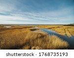 Reed At The Lake Of The Sewage...