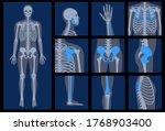 Human Man Skeleton Anatomy And...