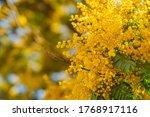 mimosa spring flowers... | Shutterstock . vector #1768917116