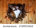 hunting trophy ram horns hanging on the wooden wall of the hunting lodge. - stock photo