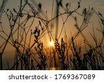 Sunset Through The Steppe Grass