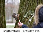 Woman Feeds A Squirrel On A...