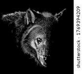 Wolf Animal Illustration ...