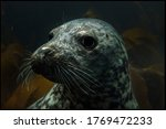 Farne Island Seals And Seal...