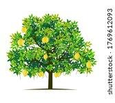 lemon tree plant on a white...   Shutterstock .eps vector #1769612093