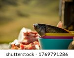 Mongolian fish in pond isolate in green background.
