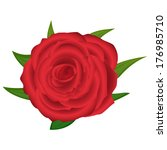 red rose closeup on a white... | Shutterstock .eps vector #176985710