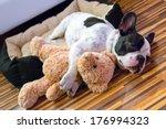 Stock photo french bulldog puppy sleeping with teddy bear 176994323