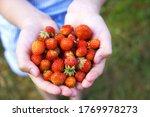 girl hands holding fresh... | Shutterstock . vector #1769978273