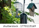 A Pair Of Goldfinches  Male And ...