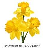 Bouquet Of Daffodil Flower...