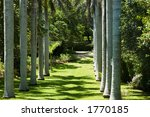 palms in bermuda | Shutterstock . vector #1770185