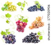 Collections Ripe Grapes Leaves Isolated - Fine Art prints