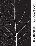 leaf close up leaf texture... | Shutterstock .eps vector #1770275039