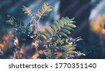 green leaves in the morning...   Shutterstock . vector #1770351140