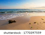 Morning On The Beach. Seaweed...