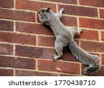 Squirrel Climbing On The Wall