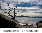 A Dead Tree By The Sea