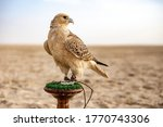 White and beige falcon sitting...