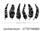 Black Paint Brush Banana Leaves ...