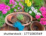 Gardening Planting Summer...