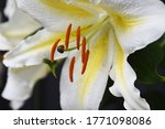 Close Up Image Of Stamen And...
