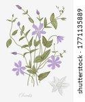 vintage vector botanical... | Shutterstock .eps vector #1771135889