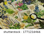 old cards with healing herbs...   Shutterstock . vector #1771216466