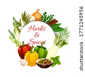 herbs and spices with vector...   Shutterstock .eps vector #1771245956
