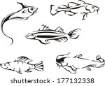black and white fishes. set of... | Shutterstock .eps vector #177132338