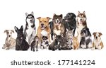 Stock photo cat and dog group of dogs and cats sitting in front of a white background 177141224