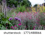 Colourful Herbaceous Border In...