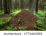 A Large Ant Hill In The Green...