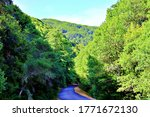 Beautiful Forest Road with Green Trees in California Marin County Northern California San Francisco Bay Area  - stock photo