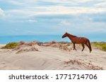 Wild Mustang On An Evening...