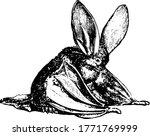 the brown long eared bat ... | Shutterstock .eps vector #1771769999