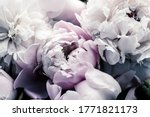 Pastel Peony Flowers As Floral...