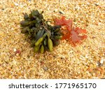 Seaweed  Marine Vegetation....