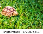 The Suzuka Turtle Is Walking On ...