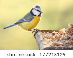 The Blue Tit  Cyanistes...