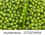 Green Peas. Green background. Green pea top view copy space. Fresh organic green peas. Vegetable harvesting.Beautiful close up of fresh peas and pea pods. Healthy vegetarian food