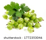 Gooseberries With Leaves...