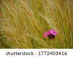 Red Flowerhead In The Middle O...
