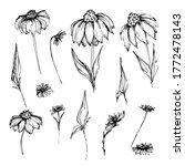 set with field  garden flower... | Shutterstock .eps vector #1772478143