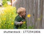 Small Child Peeps Through A...