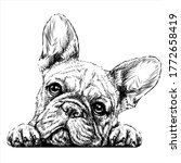 French Bulldog. Sticker On The...
