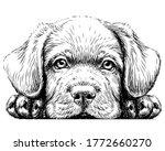 Labrador Puppy. Sticker On The...