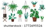 vector set of indoor plants and ...   Shutterstock .eps vector #1772695526